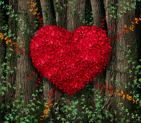 forest conservation: Valentines day red leaf vine growing in a natural forest of big trees shaped in a heart shape as a happy celebration symbol for love and romance.