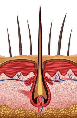 피부에 인간의 뿌리 기호의 최대 가까이로 머리 해부학 의료 개념.
