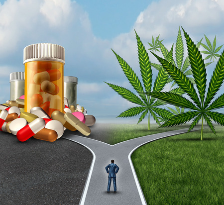 marihuana: La marihuana elección médica concepto de atención médica dilema como una persona de pie delante de dos caminos con uno que ofrece la medicina tradicional y la otra opción con el cannabis.