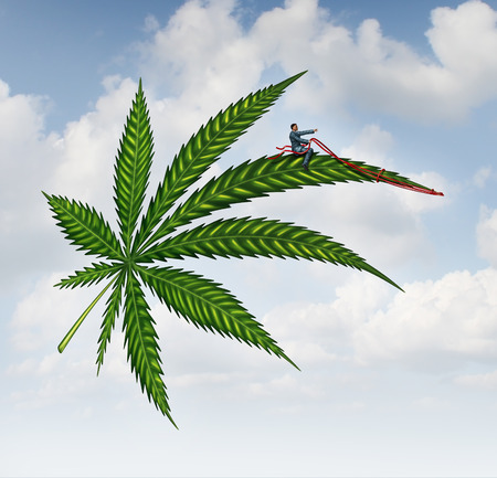 dispensary: Marijuana concept and cannabis leaf flying high with a person guiding the medicinal plant as a symbol for the social issues of recreational drugs..