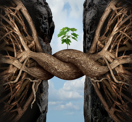 Unity growth concept and bridge the gap business symbol as two tree roots on a high steep cliff connecting and merging together bridging together to form a new sapling as an icon of partnership success and strength.