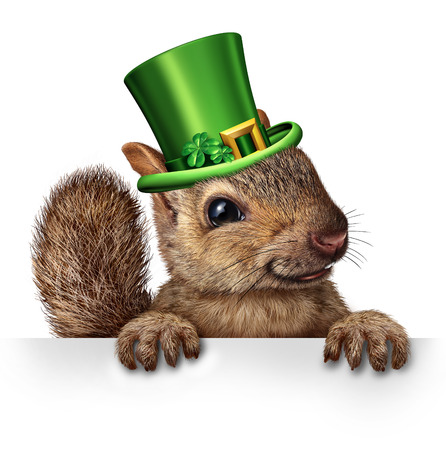squirrel: Spring celebration squirrel as cute happy wildlife wearing a green saint patricks day hat with four leaf clovers holding a blank sign as a festive holiday seasonal symbol.