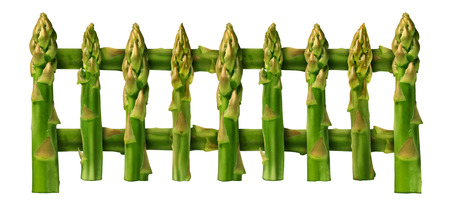 lifestyle disease: Healthy eating picket fence border design element isolated on a white background as a group of asparagus vegetables as for good nutrition and fit lifestyle or blocking disease through natural food.