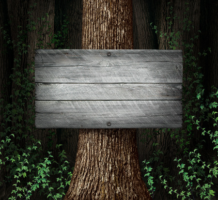 Forest blank sign background as an old thick group of trees with a weathered rustic wooden board as a symbol for nature advertising and marketing a message. photo
