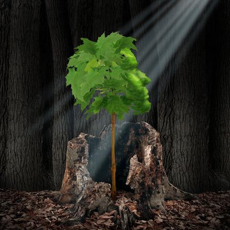 人間の頭の古い死んだ切り株から成長と形緑葉樹として生活更新および回復の概念