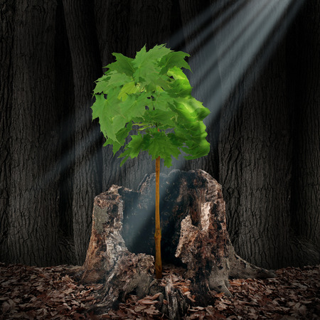 Life renewal and recovery concept as a green leaf tree shaped as a human head growing out of an old dead stump