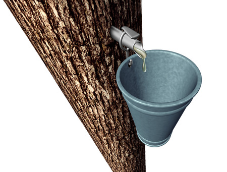 Maple syrup harvesting as tree with sap flowing drops of sweet traditional food in a metal pail isolated