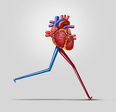 Heart fitness concept as a human cardiovascular organ with running or jogging legs made from arteries as an exercise and health care icon of living a fit lifestyle.
