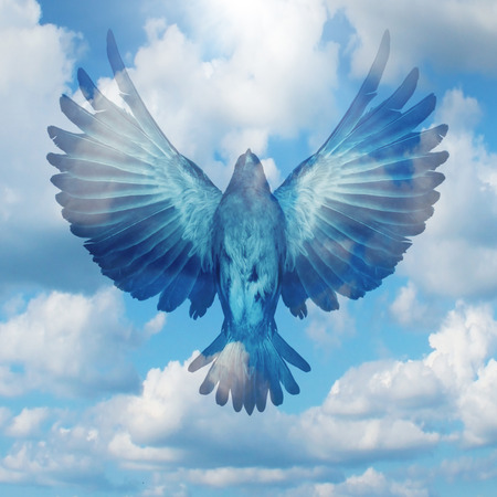 reaching your goals: Spread your wings success concept as a flying bird with open extended feathers on a blue sky as a positive achievement and opportunity symbol for reaching your goals and hope for the future.