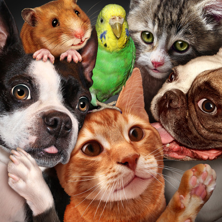 Pet group concept as dogs cats a hamster and budgie gathered together as a symbol for veterinary care and support or pets store design element for home animals advertising and marketing.