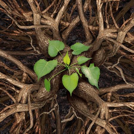 concept: El trabajo en equipo concepto de éxito y que se unen a trabajar como un equipo para el crecimiento de la prosperidad como un grupo de árboles de reuniones y de conexión como uno organiozation para producir una planta de hojas retoño verde como símbolo de cooperación exitosa. Foto de archivo