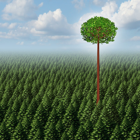 find out: Stand out from the crowd concept as a forest of evergreen trees with a successful leaf tree standing high above the competition as a business metaphor for individuality and different individual distinction to prosper as an outsider.