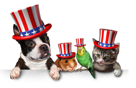 independence: Independence Day pets celebrating the United States fourth of july holiday with a dog cat bird and hamster wearing hats with the american stars and stripes. Stock Photo