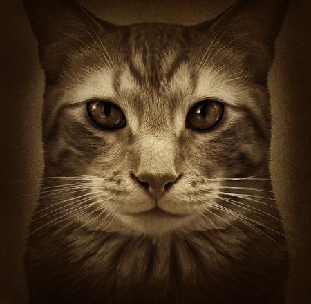 猫に近いようなグランジ ポートレート織り目加工の背景に汎用的な毛皮のような国内猫ペットの手入れをすることおよび獣医用キティ シンボル関連