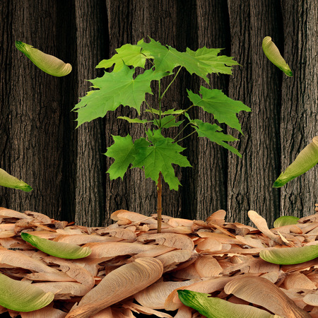 life metaphor: Seed concept as a group of maple leaf tree seeds on a forest floor with one individual sapling growing high as a business metaphor and life symbol for being successful competing against a large crowd. Stock Photo