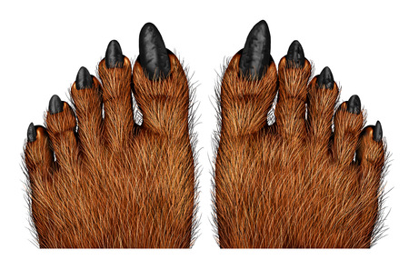 pies: Pies del hombre lobo como una criatura espeluznante para Halloween o símbolo de miedo con textura de la piel peluda y textura pies con malditos dedos monstruo lobo sobre un fondo blanco. Foto de archivo