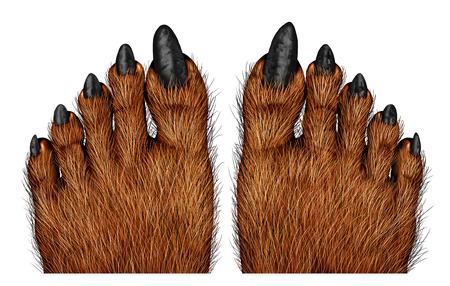 Weerwolf voeten als een griezelige schepsel voor Halloween of enge symbool met geweven harige en getextureerde voet huid met vervloekte wolf monster tenen op een witte achtergrond.
