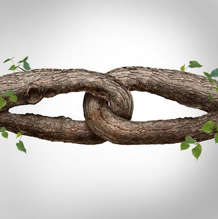 Fuerte concepto de cadena conectado como dos troncos de árboles diferentes atados y unidos entre sí como una cadena irrompible como la confianza y la fe metáfora de la dependencia y la confianza en un socio de confianza para el apoyo y la fuerza.