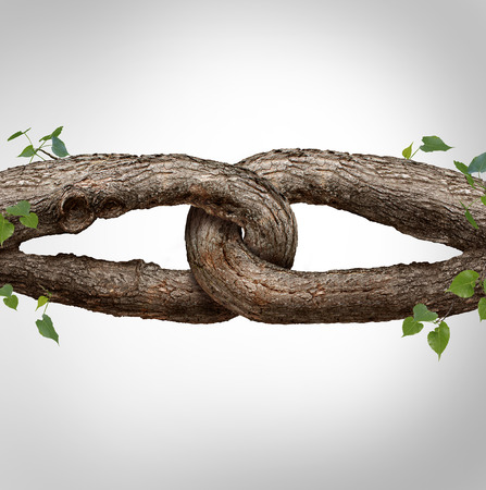 connection connections: Strong chain concept connected as two different tree trunks tied and linked together as an unbreakable chain as a trust and faith metaphor for dependence and reliance on a trusted partner for support and strength. Stock Photo