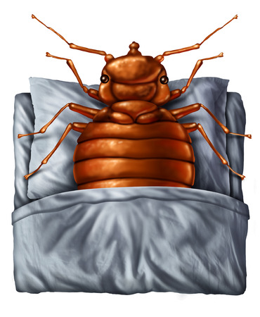 Bedbug or bed bug concept as a parasitic insect pest resting on a pillow under the sheets as a symbol and metaphor for the danger of a bloodsucking parasite living inside your mattress. Фото со стока