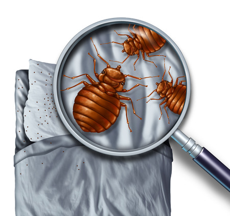 bed sheets: Bed bug or bedbug infestation concept as a magnification close up of  parasitic insect pests on a pillow and under the sheets as a hygiene symbol and metaphor for inspection and danger of bloodsucking parasites living inside a mattress.