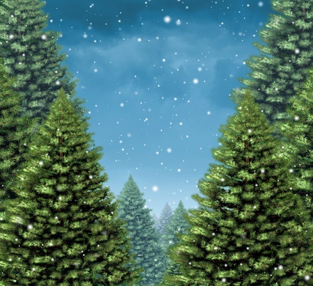 trees seasonal: Winter tree background concept as a group of Christmas trees with snow flakes falling from a cold blue sky as a seasonal holiday symbol with blank copy space for a greeting card or a festive New Year season announcement. Stock Photo