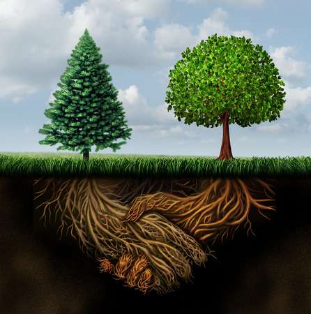teamwork  together: Global agreement shaking hands concept as two different trees from diverse regions showing underground roots coming together in a handshake as a symbol for international cooperation and making a deal.