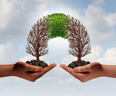 merge: Build a business as a collaborative team with struggling trees connecting with a partner for teamwork financial growth and success as a metaphor for partnership cooperation. Stock Photo