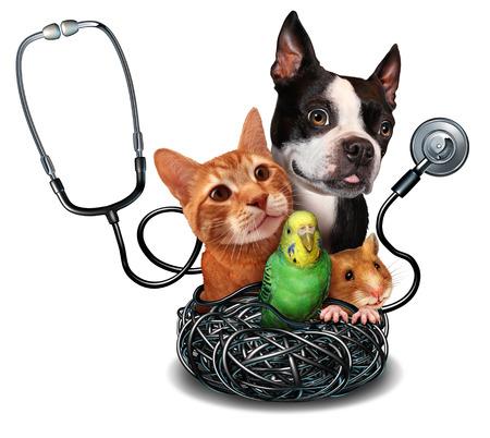 veterinario: Cuidado y mascotas medicina veterinaria concepto como un grupo de animales domesticados como un hámster perro gato y el pájaro como símbolo para el veterinario de la salud médica y seguro de salud para mascotas. Foto de archivo