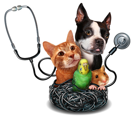 hamster: Veterinary care and pet medicine concept as a group of domesticated animals as a cat dog hamster and bird as a symbol for veterinarian medical healthcare and health insurance for pets.