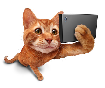Selfie cat on a white background as a cute orange tabby kitty with a smile in forced perspective taking a selfy portrait picture with a smart phone or digital camera as funny and humorous social networking symbol. Banque d'images