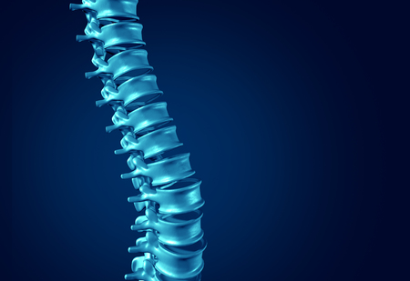 bone anatomy: Human Spine concept as medical health care anatomy symbol with the skeletal spinal bone structure closeup on a dark blue background as blank copy space. Stock Photo