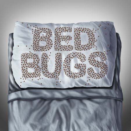 bed: Bed bug on pillow and in bed as a bedbug infestation concept shaped as text letters as parasitic insect pests under the sheets as a hygiene health care symbol and metaphor of parasite bite danger inside a mattress. Stock Photo