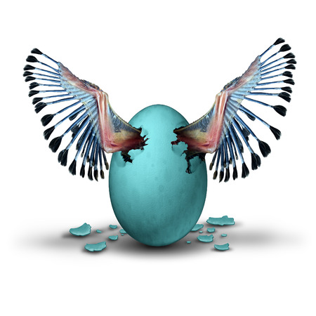 hurried: Premature start concept and impatient ambition business metaphor as the young wings of a baby birg emerging and breaking out of a blue egg as a symbol for prematurely starting a journey.