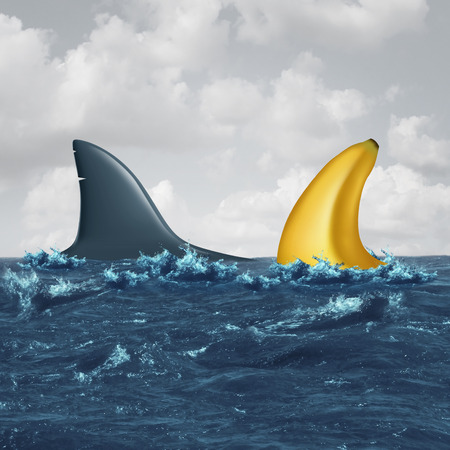 Unfair negotiation business concept and out of your league symbol as a shark fin facing off with a similar shaped banana as a metaphor for lack of skills and vulnerable negotiating icon for a contract or agreement.