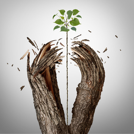 success: Breaking through concept as a green sapling growing upward and destroying a tree barrier as a business success metaphor for potential ambition and strong will to succeed.