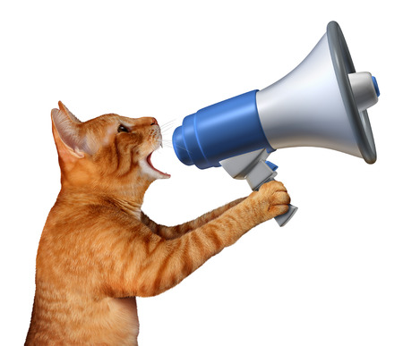 Cat announcement concept as a generic feline holding a bullhorn or megaphone to announce news or promote pet and veterinary issues or animal marketing and promotion isolated on a white background. Stock Photo