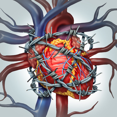 four chambers: Heart pain medical health care concept as a human cardiovascular organ wrapped in sharp barbed wire as a metaphor for coronary problems and health decline in blood circulation. Stock Photo