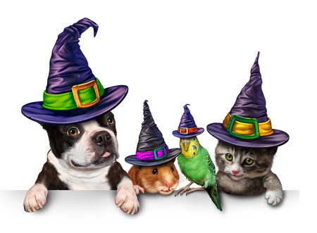 holiday pets: Halloween Pet blank sign with a fun cat happy dog cute hamster and budgie each wearing a witch hat head garment as an autumn seasonal symbol for funny pets in costume.
