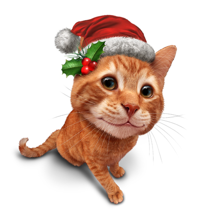 santaclause: Cute christmas cat or holiday celebration feline pet on a white background as an orange tabby kitty with a smile in forced perspective as a symbol of pets and veterinary health during winter holidays. Stock Photo