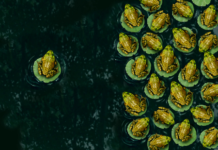 unorthodox: Individualism and confidence or individuality symbol and independent thinker concept as a group of green frogs resting on a lilypad on water with one individual in the opposite direction as a business icon.