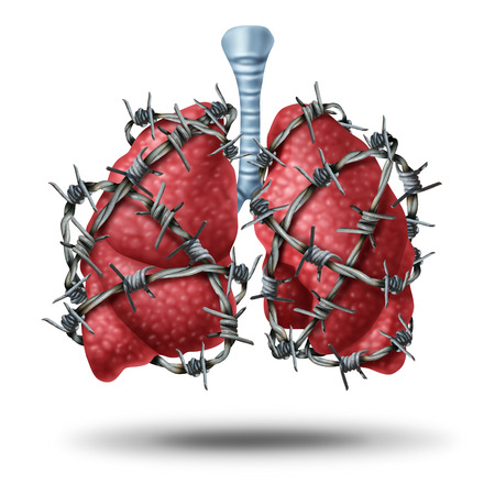 human lung: Lung pain medical concept as a pair of human lungs organ wrapped with dangerous barbed or barb wire as a health care symbol of cardiovascular problems as cystic fibrosis or chest pain metaphor.