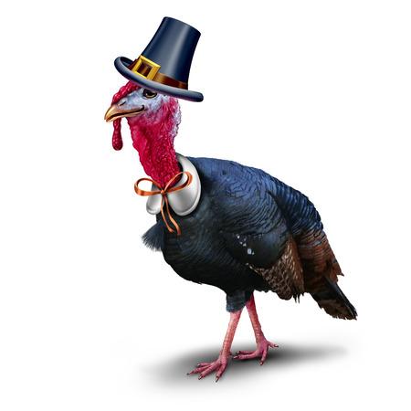 Turkije pelgrim karakter op een witte achtergrond als seizoengebonden vogel het dragen van een hoed als een herfst symbool voor de oogst te vieren. Stockfoto