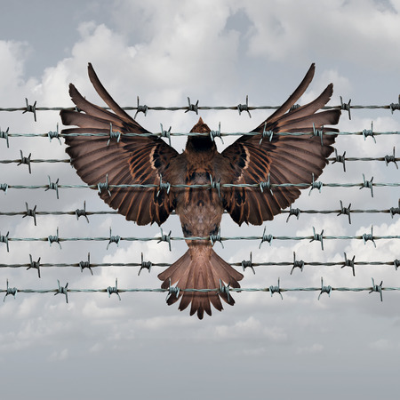 limitations: Restricted freedom concept and constrained opportunity symbol as a bird caught and entangled in a barbed wire fence as an icon for frustration and suppression.