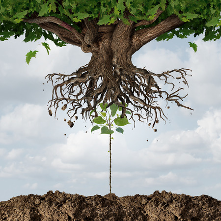 renewal: New leadership takeover or taking over concept or development and renewal business symbol  as an emerging young sapling pushing out an older more established tree as a success metaphor for a start up or emerging competitor. Stock Photo