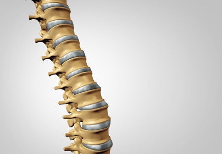 intervertebral: Spine diagnostic human spinal system concept as medical health care anatomy symbol with the skeletal bone structure and  intervertebral discs closeup with copy space.