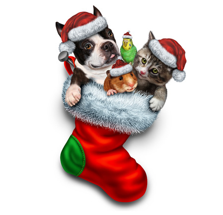 pet store: Pet holiday stocking and Christmas animals group in a red festive sock for veterinary medicine and pet store or animal adoption during winter holidays as a cute dog hamster bird and a cat with a santa haton a white background.