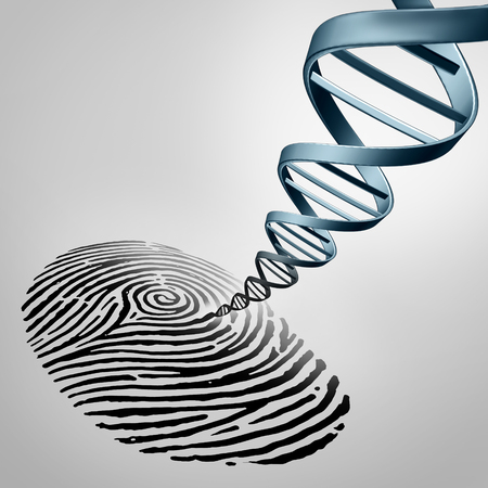 Genetic fingerprinting as a fingerprint with DNA emerging out as a medical identification symbol for a paternity test or biotechnology genome icon.