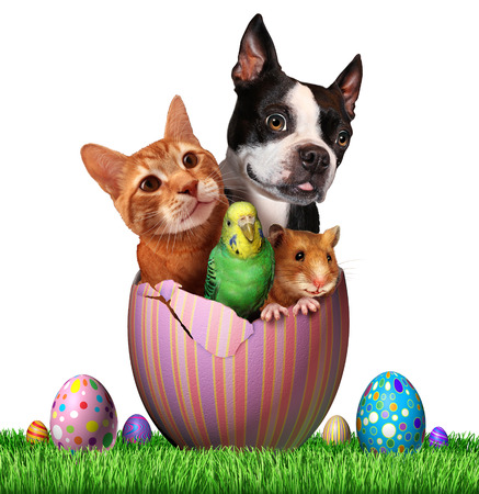 holiday pets: Easter pets and pet spring holiday animals group for veterinary medicine and pet store holidays as a cute dog hamster bird and a cat inside an open decorated egg on a grass field hunting for eggs with a white background.