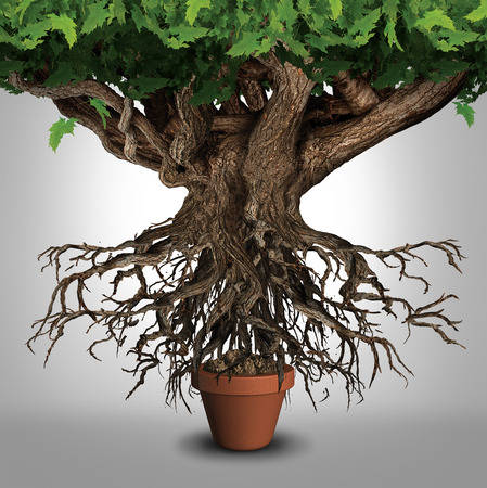 conflicting: Business expansion and too big to manage business that does not fit metaphor or expanding outgrowing your home concept as a large tree  with a small plant pot as an icon for managing growth success
